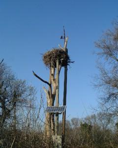 nid cigogne  installé